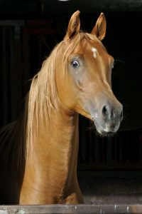 User picture horses Middle East