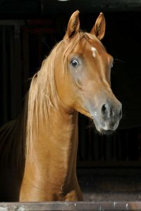 About Horses Middle East