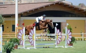Show jumping category