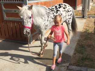 Children horsemanship classes