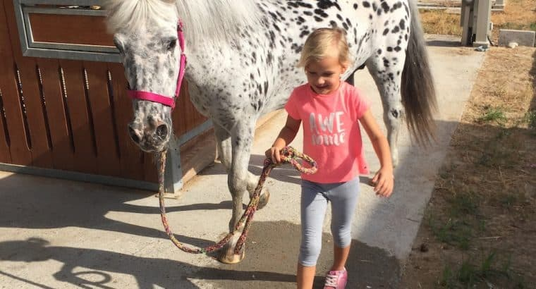 Children horsemanship classes