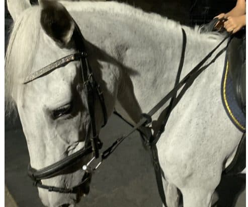 Horse lease at dubai polo equestrain club