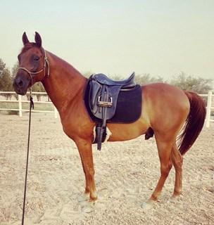 Race pony