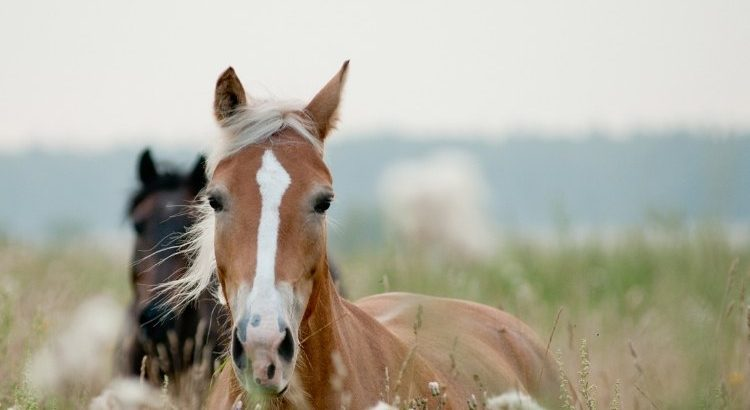 Choosing the right horse for you