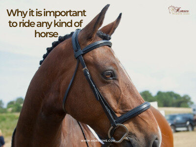 Why it is important to ride any kind of horse