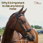 HorsesMEBlogThumbnailOct