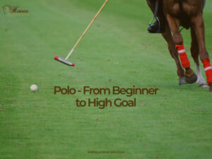 horse polo, from beginners to high goal