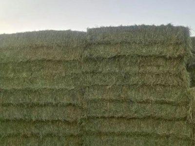 Rhodes Grass Hay